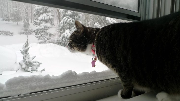 Trapped: a Story of Winter